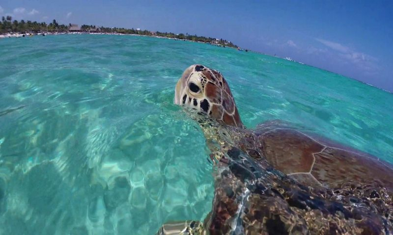 Akumal, Land of Turtles
