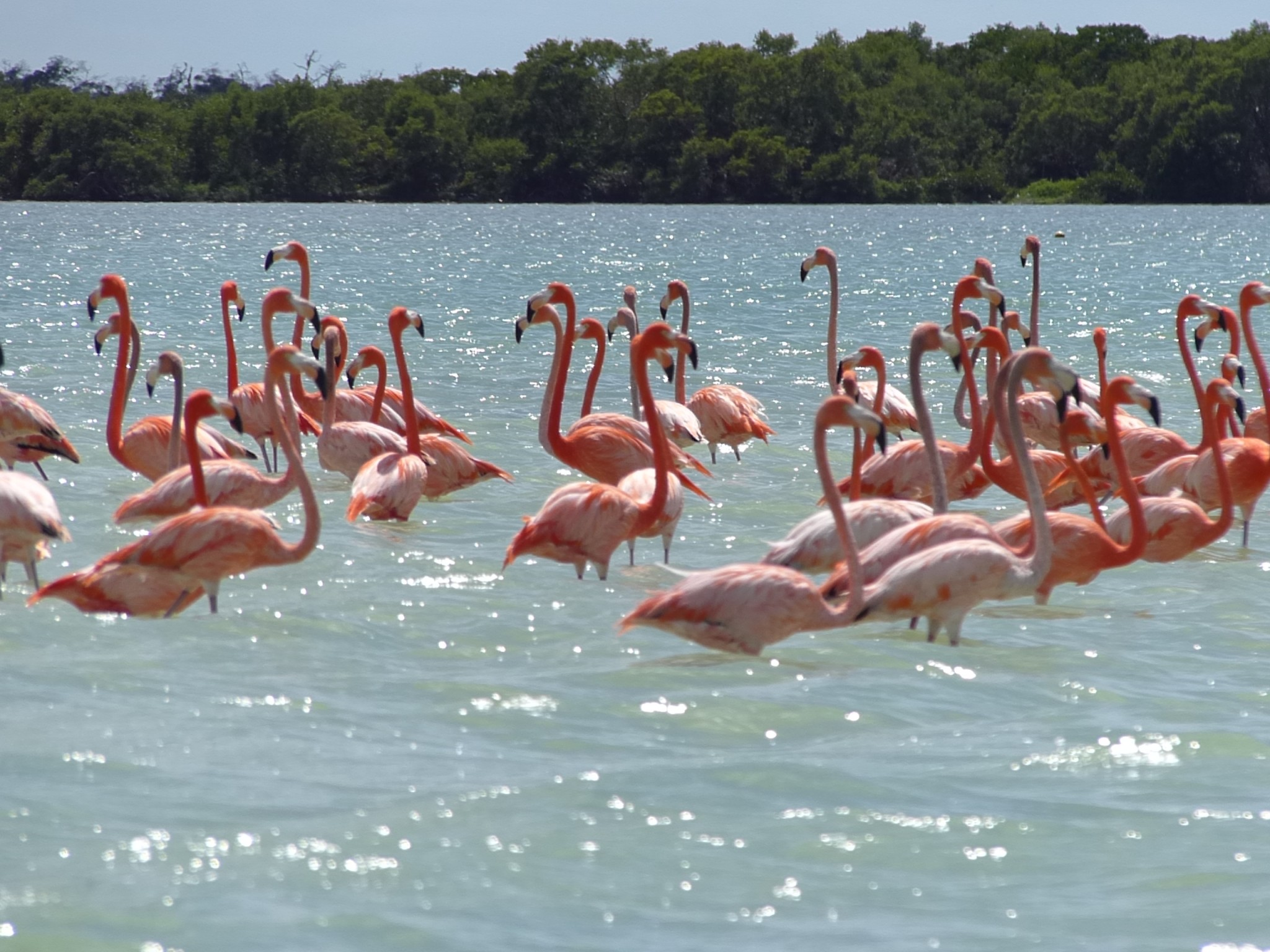 What Kind Of Food Do Flamingos Eat
